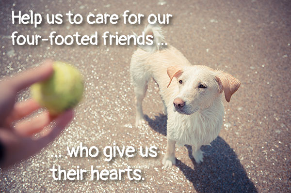 Help us to care for our four-footed friends who give us their hearts.
